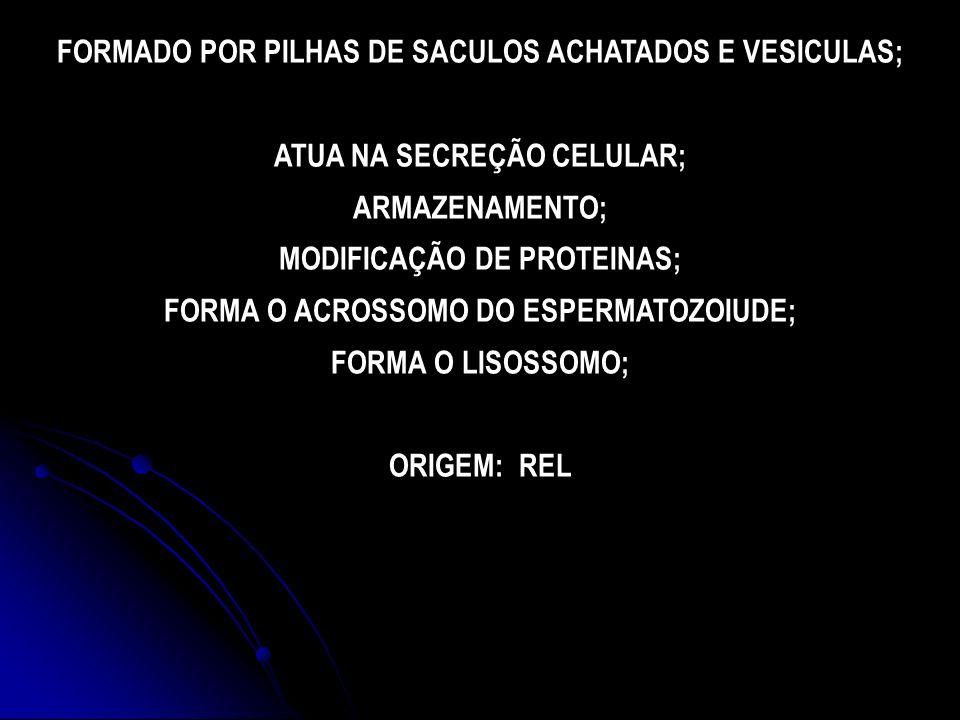 FORMADO POR PILHAS DE SACULOS ACHATADOS E VESICULAS;