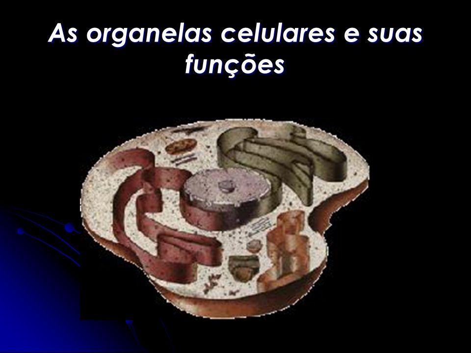 As organelas celulares e suas funções