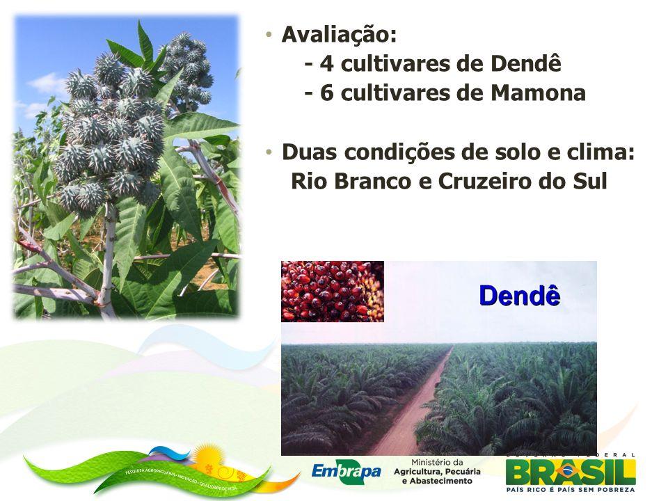 Avaliação: - 4 cultivares de Dendê. - 6 cultivares de Mamona.