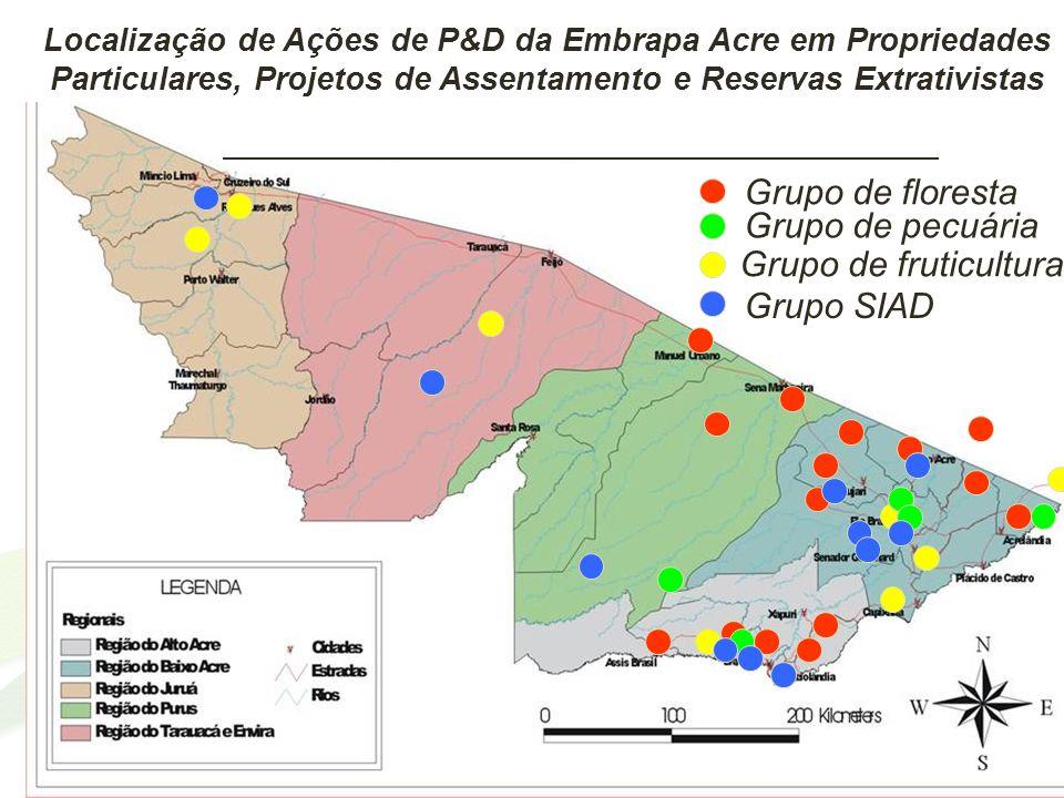 Grupo de floresta Grupo de pecuária Grupo de fruticultura Grupo SIAD