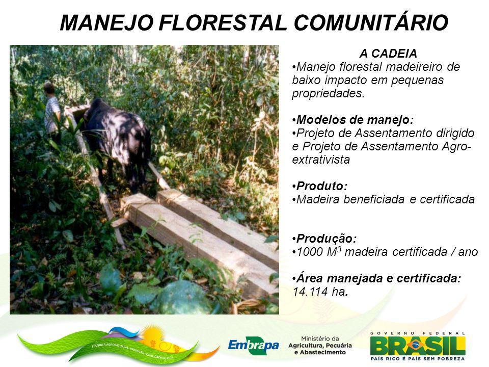 MANEJO FLORESTAL COMUNITÁRIO