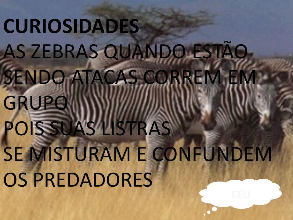 AS ZEBRAS QUANDO ESTÃO SENDO ATACAS CORREM EM GRUPO