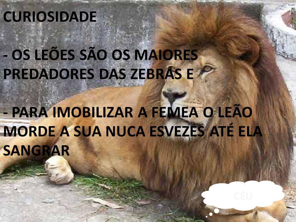 - OS LEÕES SÃO OS MAIORES PREDADORES DAS ZEBRAS E