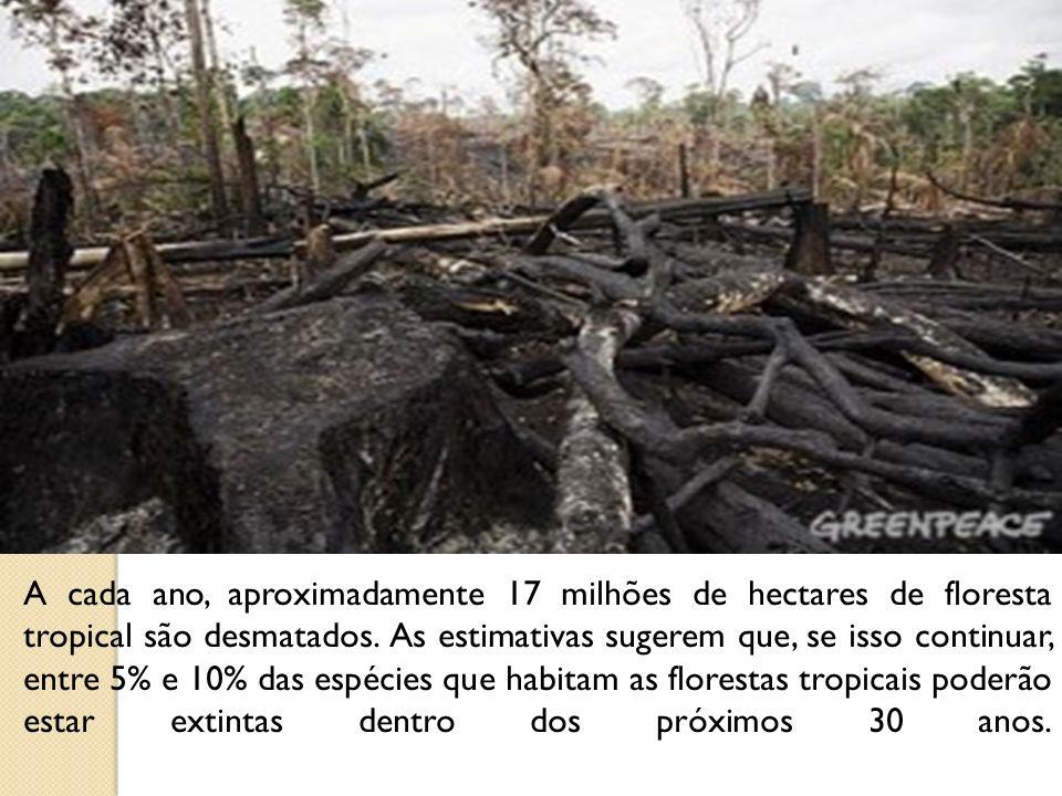 A cada ano, aproximadamente 17 milhões de hectares de floresta tropical são desmatados.