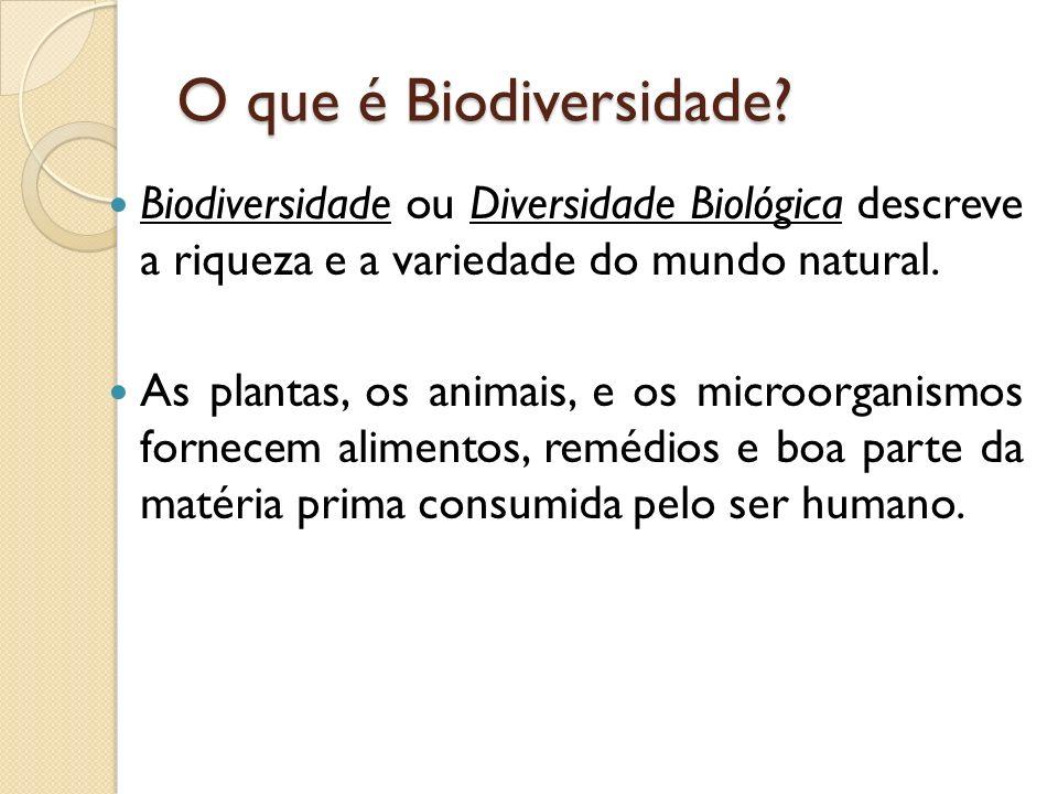 O que é Biodiversidade Biodiversidade ou Diversidade Biológica descreve a riqueza e a variedade do mundo natural.