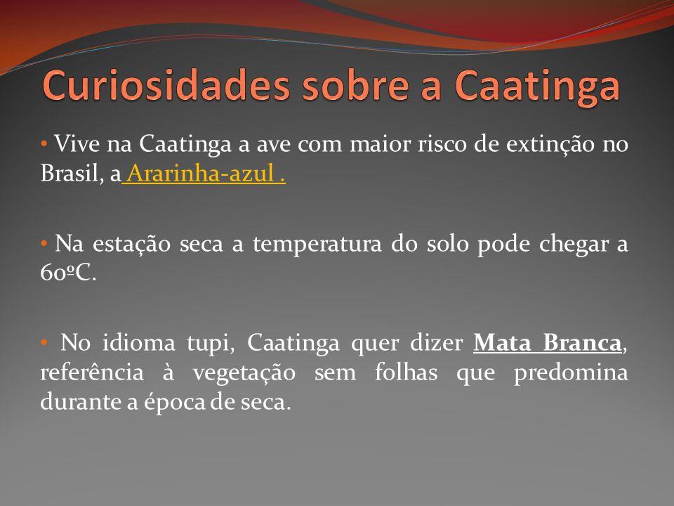 Curiosidades sobre a Caatinga