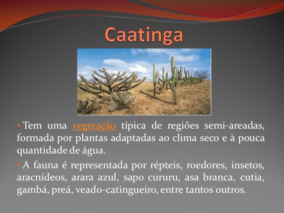 CaatingaTem uma vegetação típica de regiões semi-areadas, formada por plantas adaptadas ao clima seco e à pouca quantidade de água.