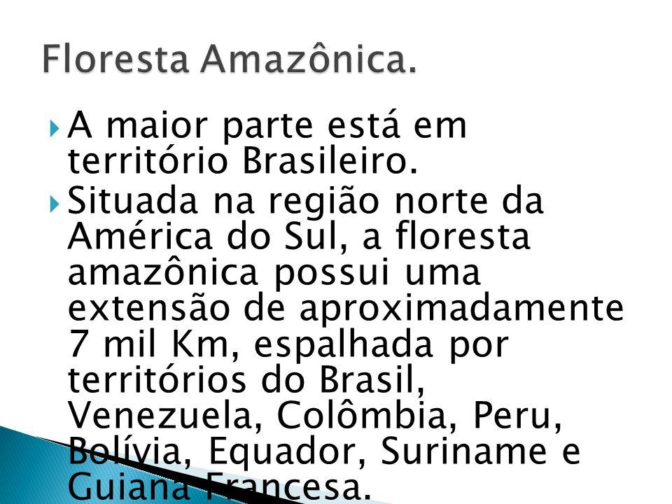Floresta Amazônica. A maior parte está em território Brasileiro.