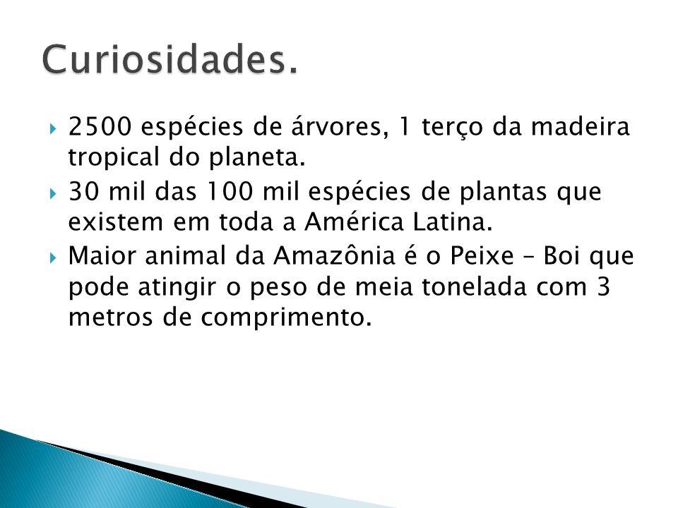 Curiosidades. 2500 espécies de árvores, 1 terço da madeira tropical do planeta.