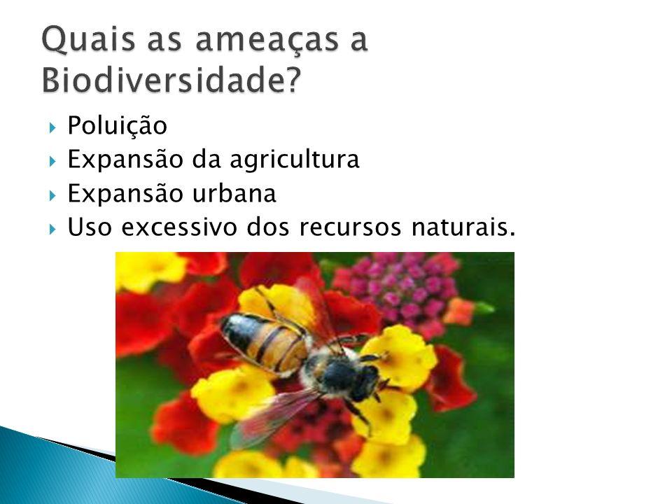 Quais as ameaças a Biodiversidade