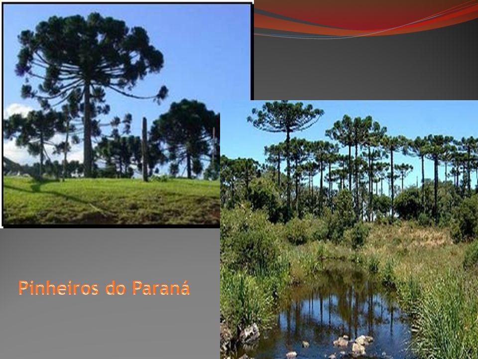 Pinheiros do Paraná