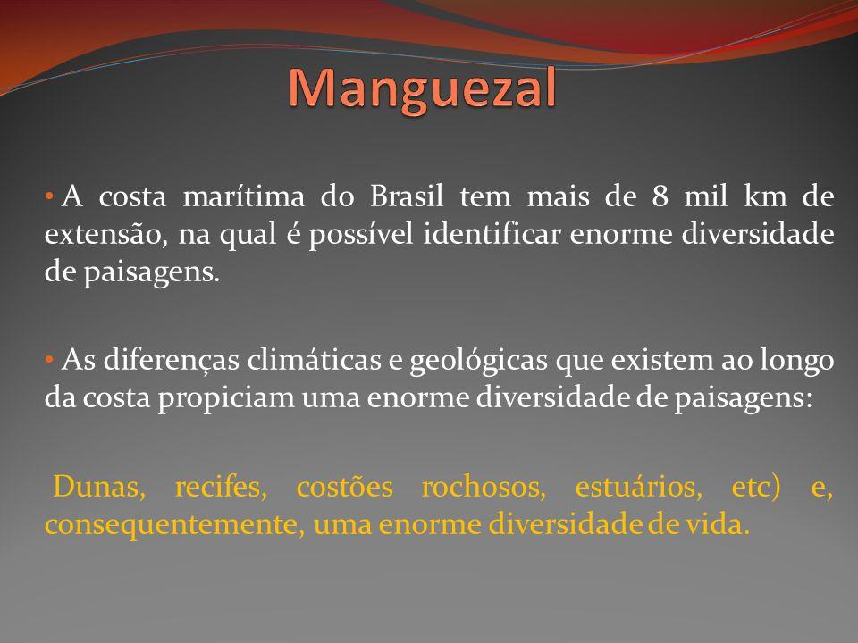 Manguezal A costa marítima do Brasil tem mais de 8 mil km de extensão, na qual é possível identificar enorme diversidade de paisagens.