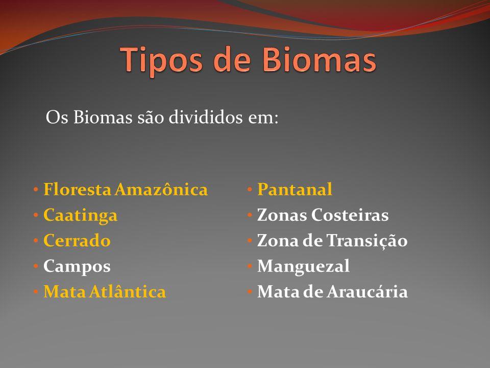 Tipos de Biomas Os Biomas são divididos em: Floresta Amazônica