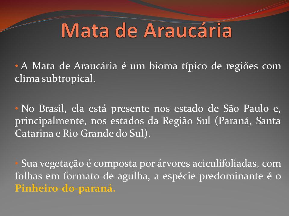 Mata de Araucária A Mata de Araucária é um bioma típico de regiões com clima subtropical.