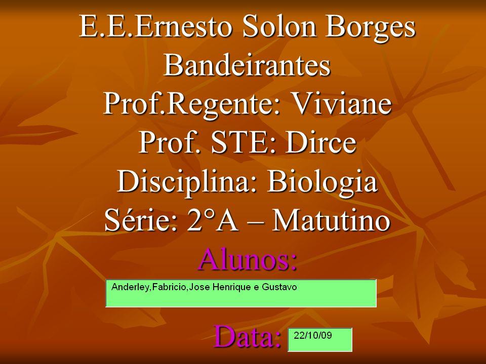 E. E. Ernesto Solon Borges Bandeirantes Prof. Regente: Viviane Prof