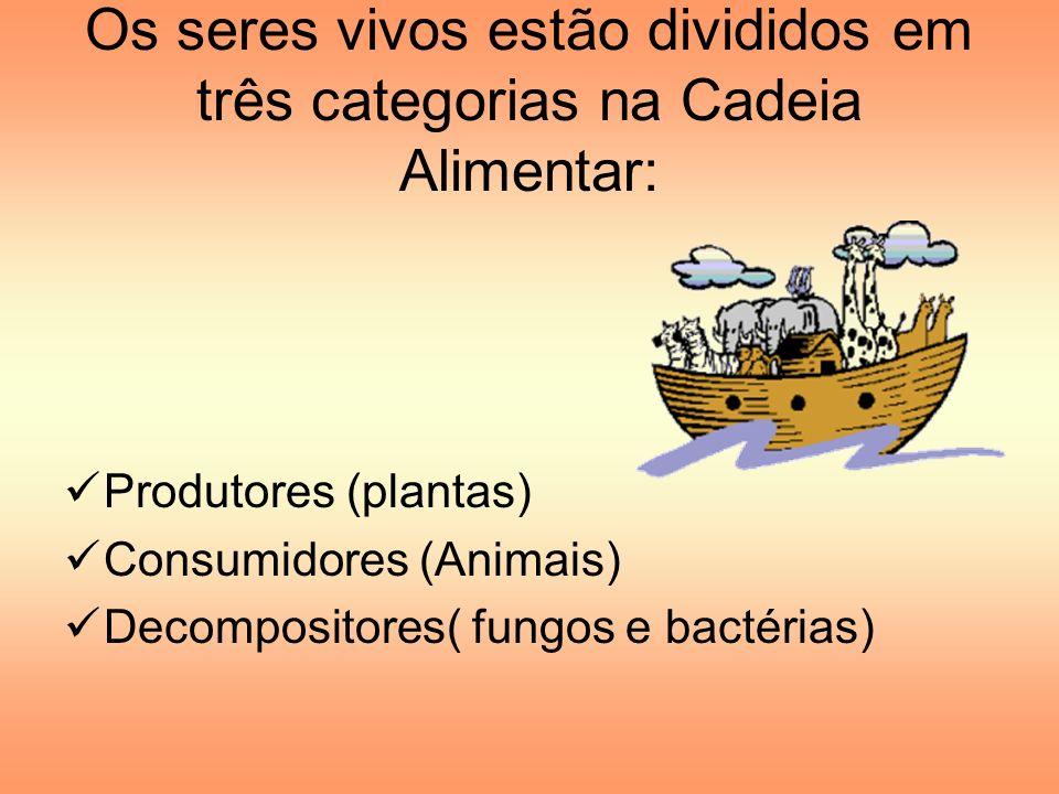 Os seres vivos estão divididos em três categorias na Cadeia Alimentar: