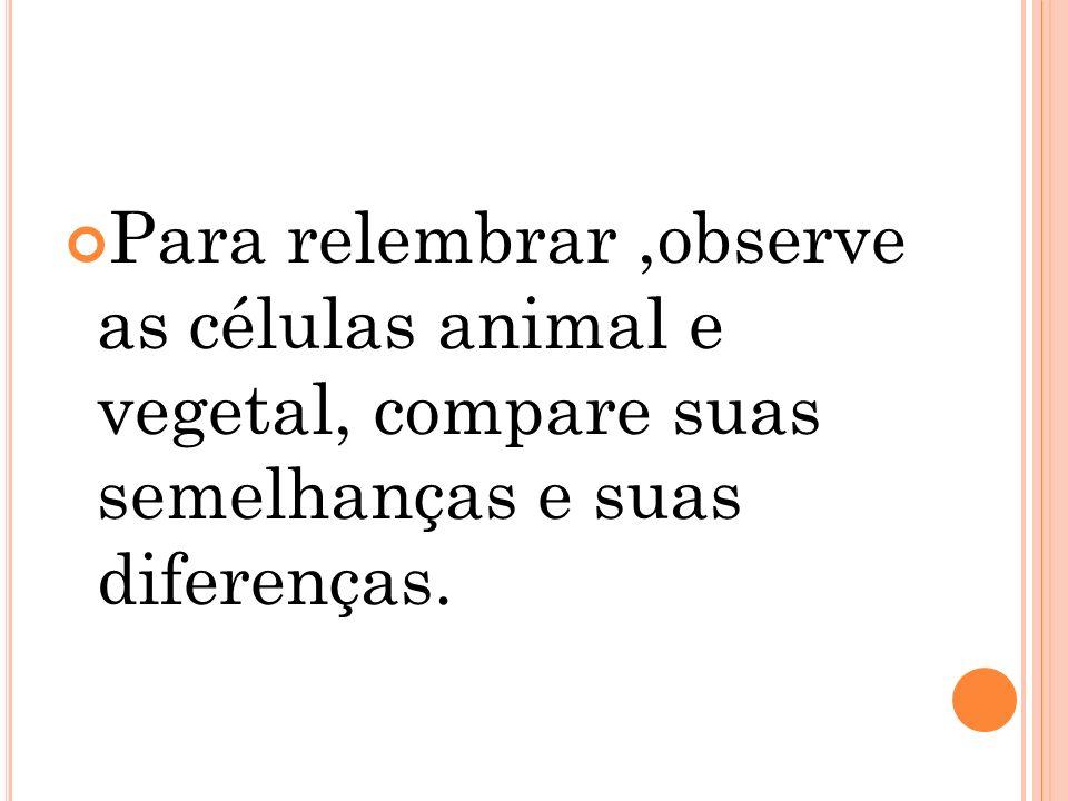 Para relembrar ,observe as células animal e vegetal, compare suas semelhanças e suas diferenças.
