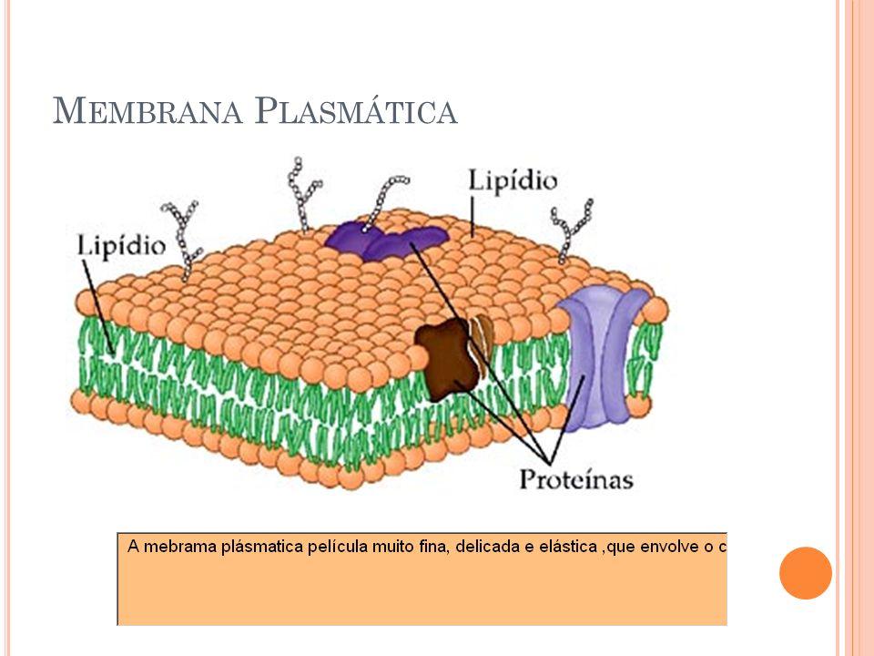 Membrana Plasmática 20