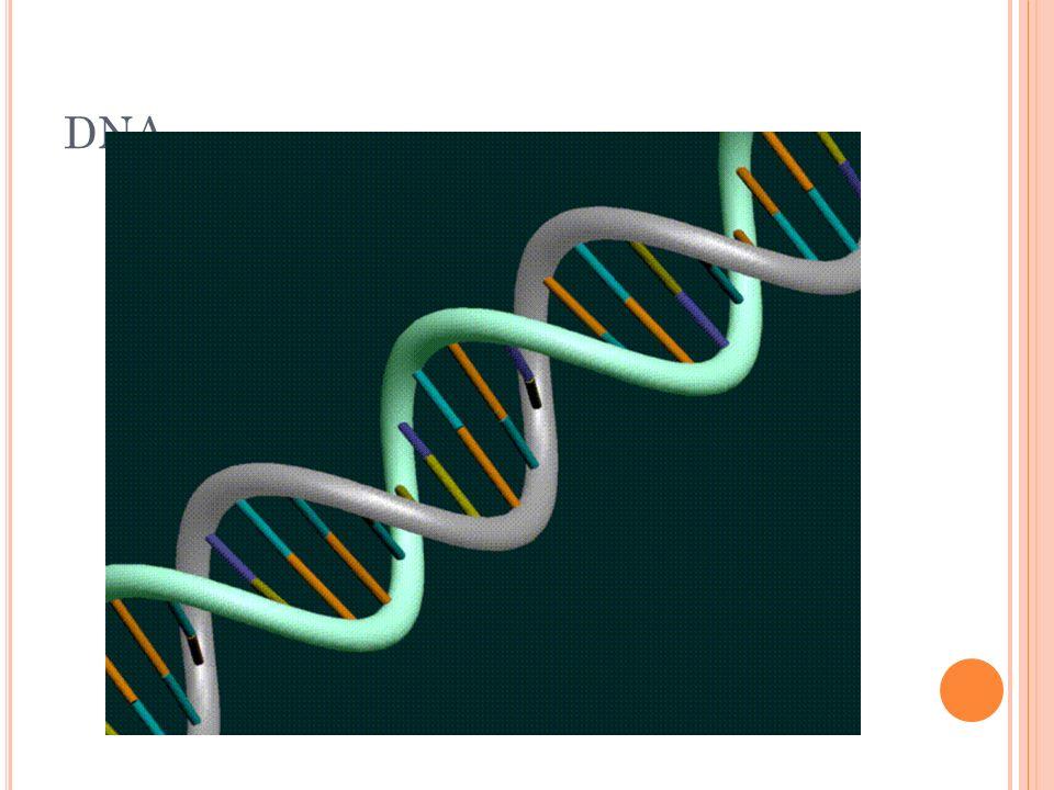 DNA 28