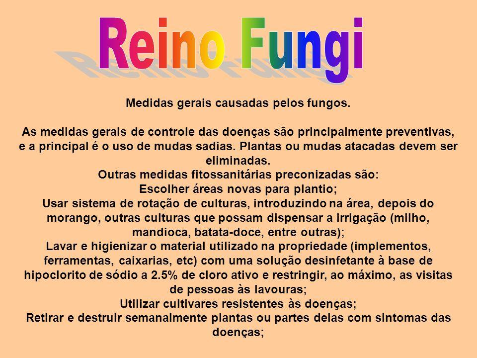 Reino Fungi Medidas gerais causadas pelos fungos.