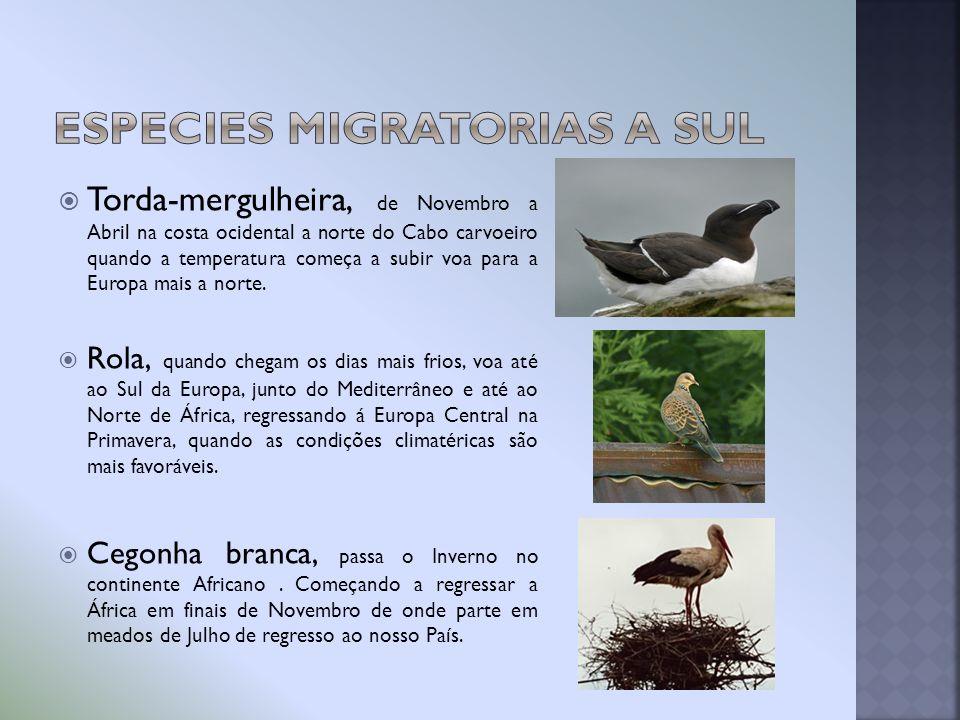 Especies migratorias a Sul