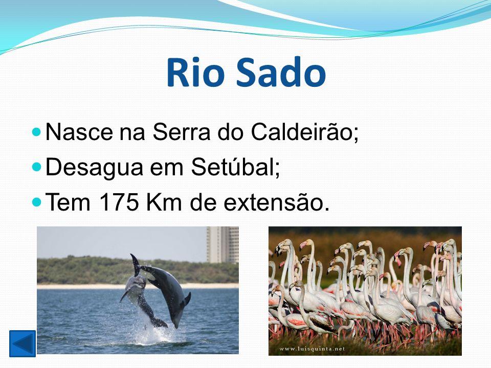 Rio Sado Desagua em Setúbal; Tem 175 Km de extensão.