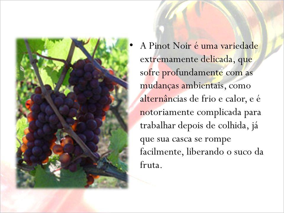 A Pinot Noir é uma variedade extremamente delicada, que sofre profundamente com as mudanças ambientais, como alternâncias de frio e calor, e é notoriamente complicada para trabalhar depois de colhida, já que sua casca se rompe facilmente, liberando o suco da fruta.