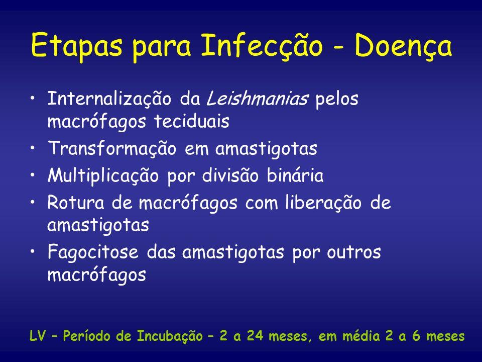 Etapas para Infecção - Doença