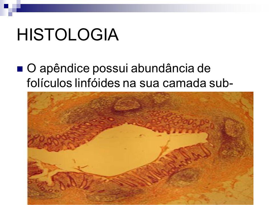 HISTOLOGIA O apêndice possui abundância de folículos linfóides na sua camada sub-mucosa