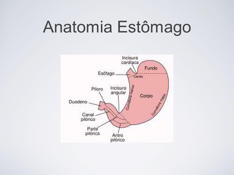 Anatomia Estômago