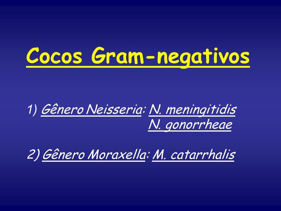 Cocos Gram-negativos 1) Gênero Neisseria: N. meningitidis. N