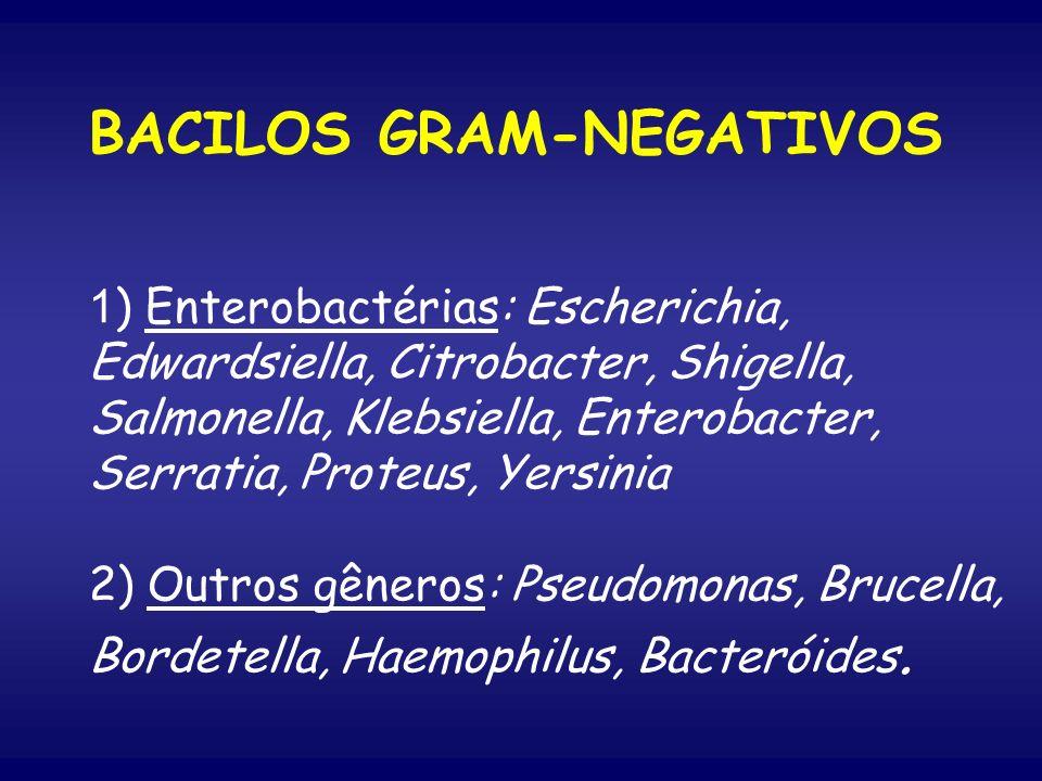 BACILOS GRAM-NEGATIVOS 1) Enterobactérias: Escherichia, Edwardsiella, Citrobacter, Shigella, Salmonella, Klebsiella, Enterobacter, Serratia, Proteus, Yersinia 2) Outros gêneros: Pseudomonas, Brucella, Bordetella, Haemophilus, Bacteróides.