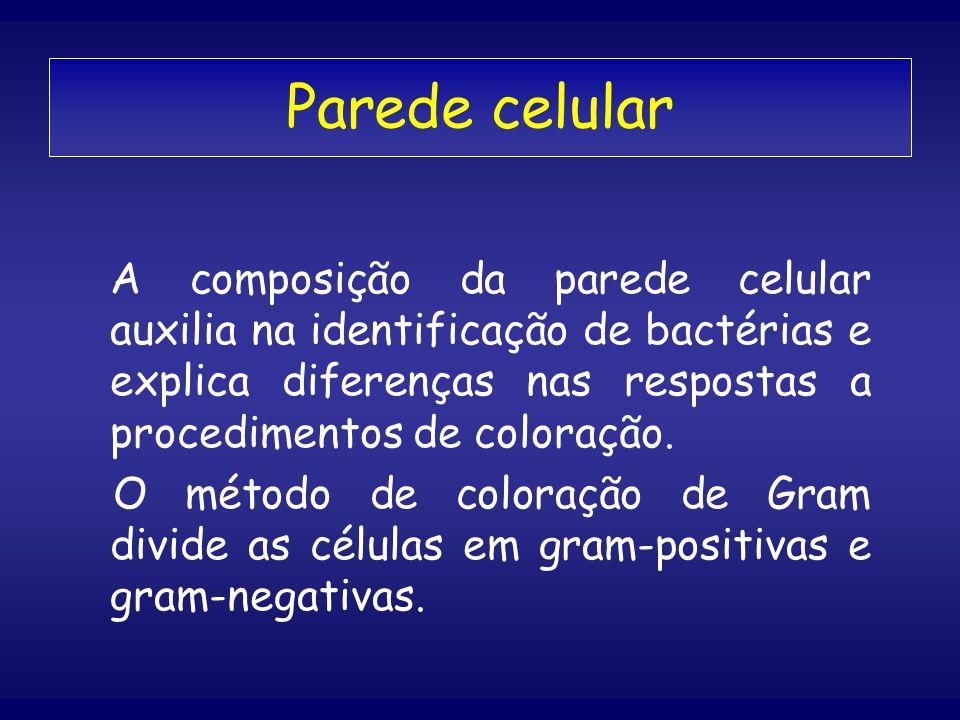 Parede celular A composição da parede celular auxilia na identificação de bactérias e explica diferenças nas respostas a procedimentos de coloração.