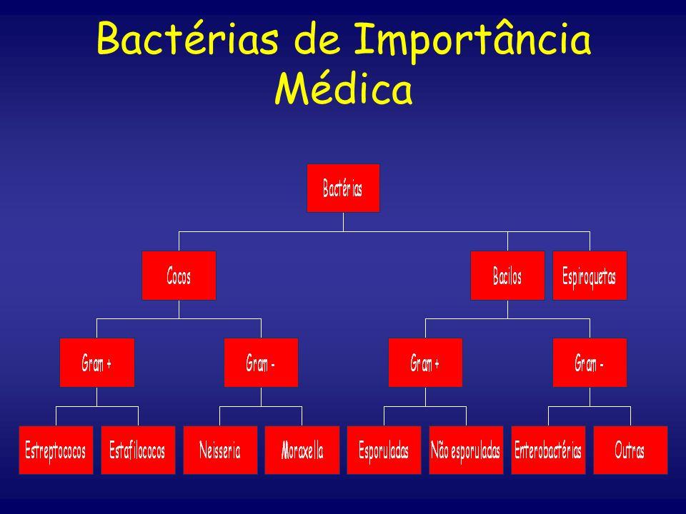 Bactérias de Importância Médica