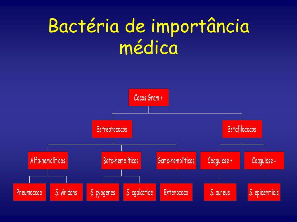 Bactéria de importância médica