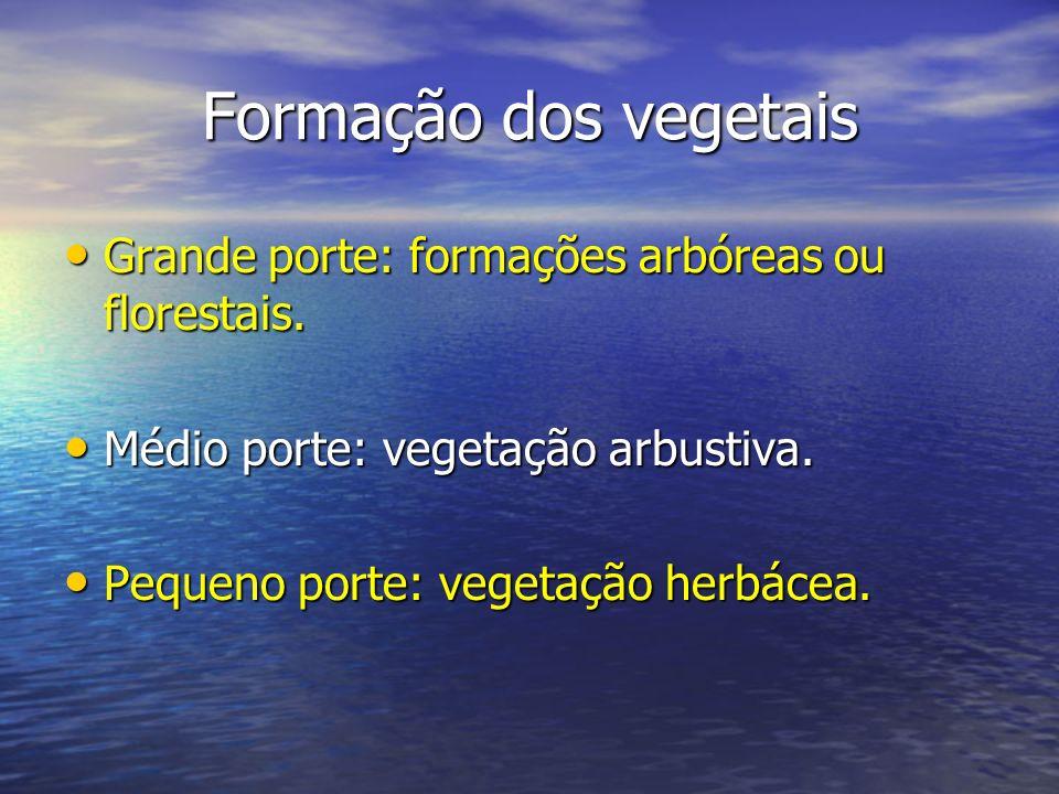 Formação dos vegetais Grande porte: formações arbóreas ou florestais.