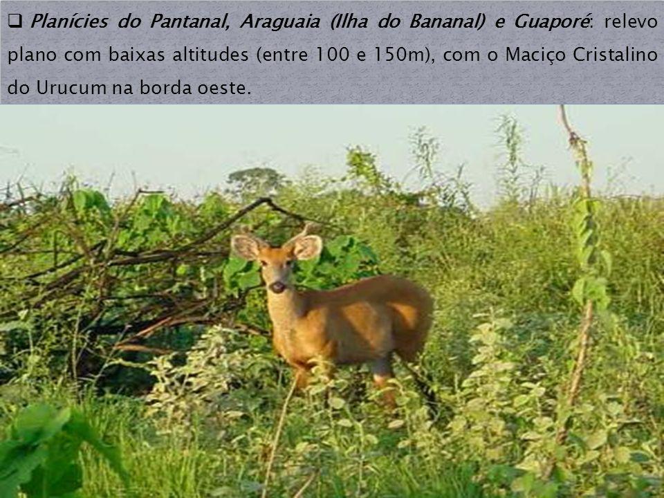Planícies do Pantanal, Araguaia (Ilha do Bananal) e Guaporé: relevo plano com baixas altitudes (entre 100 e 150m), com o Maciço Cristalino do Urucum na borda oeste.