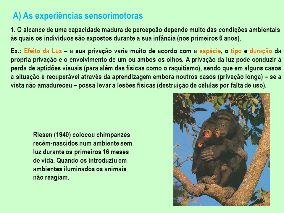 A) As experiências sensorimotoras