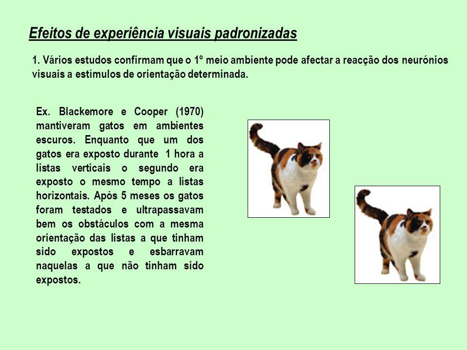 Efeitos de experiência visuais padronizadas