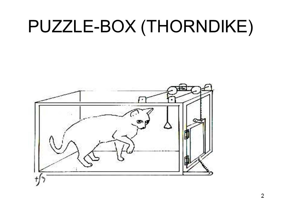 PUZZLE-BOX (THORNDIKE)