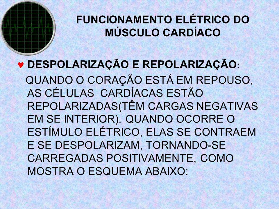 FUNCIONAMENTO ELÉTRICO DO MÚSCULO CARDÍACO