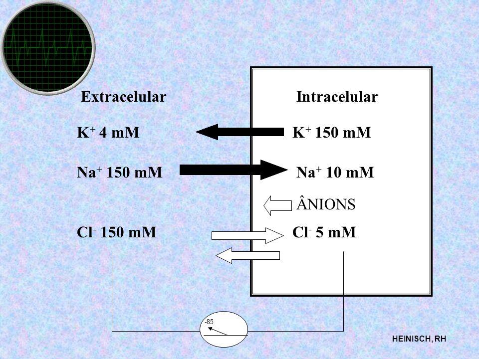Extracelular Intracelular K+ 4 mM K+ 150 mM Na+ 150 mM Na+ 10 mM