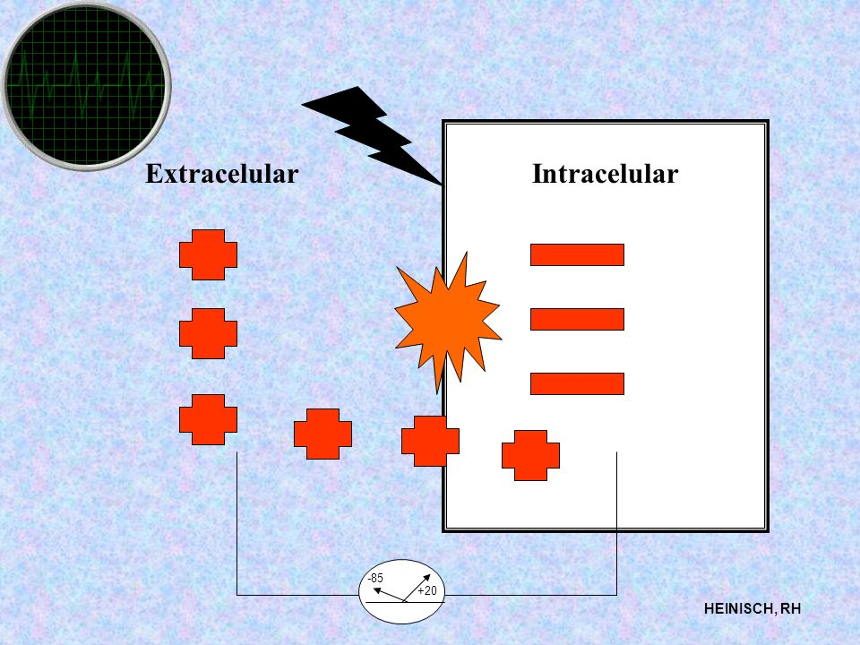 Extracelular Intracelular -85 +20 HEINISCH, RH