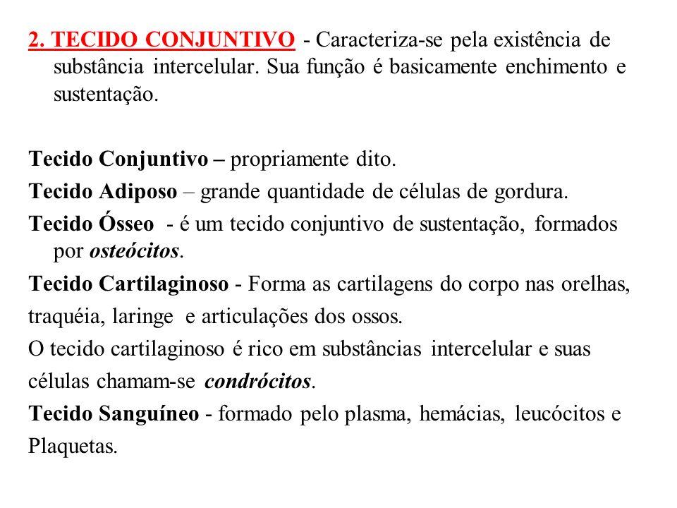 2.TECIDO CONJUNTIVO - Caracteriza-se pela existência de substância intercelular.