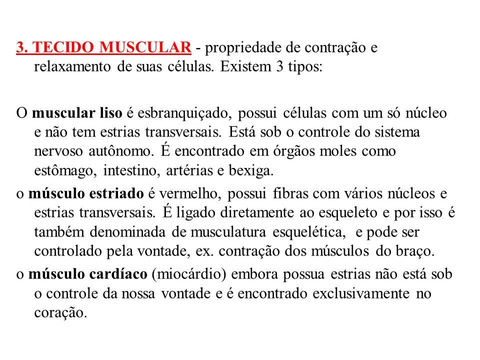 3. TECIDO MUSCULAR - propriedade de contração e relaxamento de suas células.