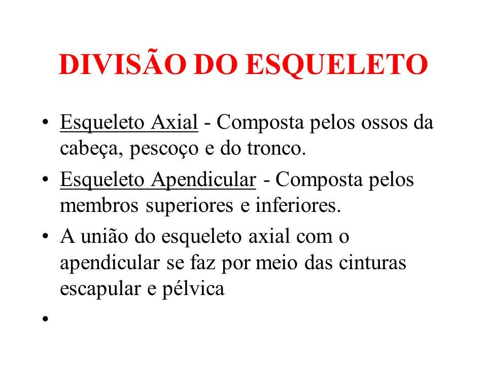 DIVISÃO DO ESQUELETOEsqueleto Axial - Composta pelos ossos da cabeça, pescoço e do tronco.
