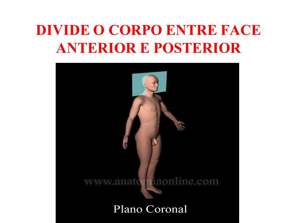 DIVIDE O CORPO ENTRE FACE ANTERIOR E POSTERIOR