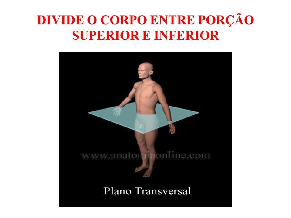 DIVIDE O CORPO ENTRE PORÇÃO SUPERIOR E INFERIOR