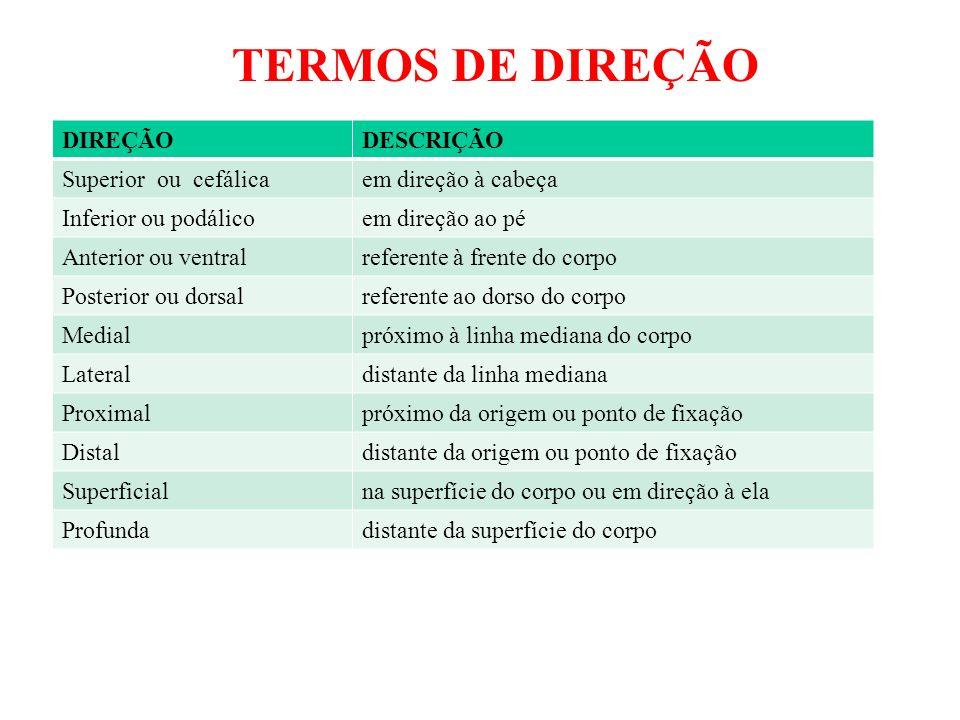 TERMOS DE DIREÇÃO DIREÇÃO DESCRIÇÃO Superior ou cefálica