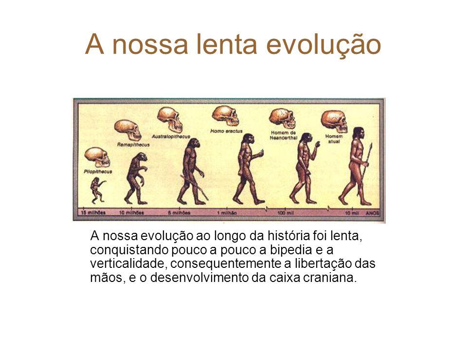 A nossa lenta evolução